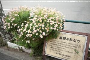 _MG_2010